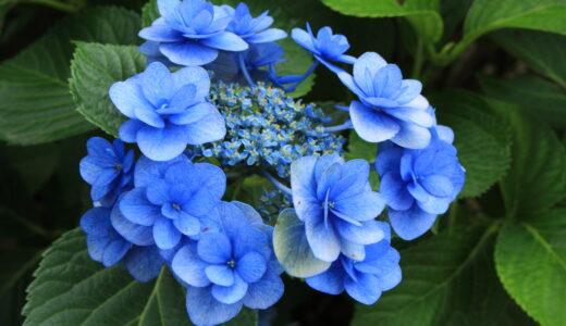 写真を趣味にしたら近所に咲く花に目が行くようになった話